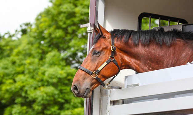 Planning a Long-Distance Move With Your Horse