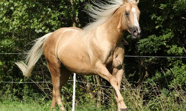 Built to Last: Ideal Equine Conformation