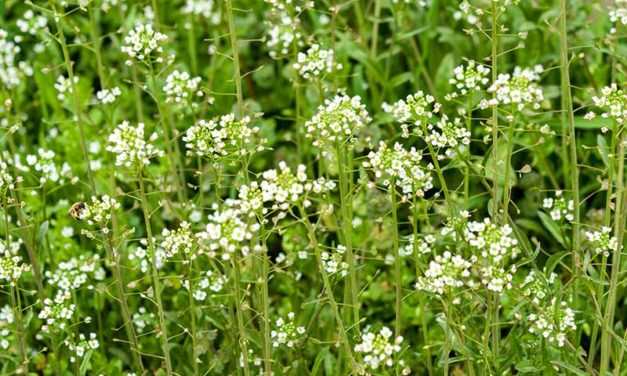 Common Types of Weeds in Horse Pastures