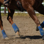 How the Horse's Hoof Functions