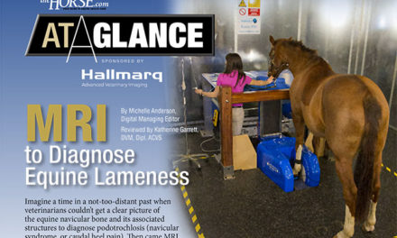 At a Glance: MRI to Diagnose Equine Lameness