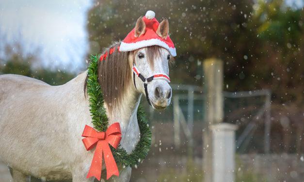 Horse Trainer Tik Maynard's Christmas Wish List