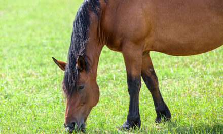 Equine Innovators: Feeding Horses With Dr. Laurie Lawrence