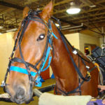Dynamic Endoscopy to Assess Equine Airway Function
