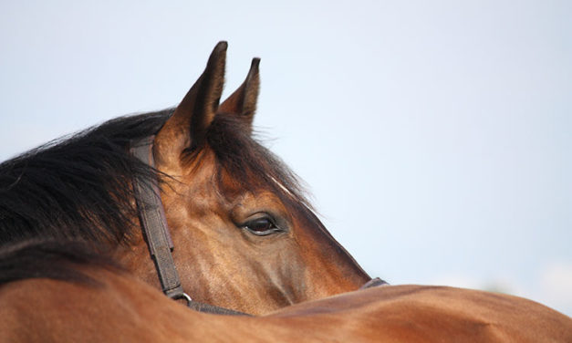 How To Manage Horses With Back Pain