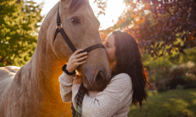 The Right Horse Helps Home More Than 2,600 Horses in 2020