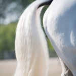 Why Is My Horse Gassy During Exercise?