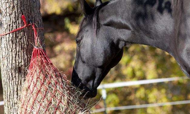 Do Certain Nutrients Enhance Equine Immune Response?