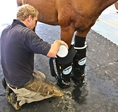 The Performance Horse's Therapy Toolkit