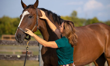 Diagnosing and Treating Poll Pain in Horses