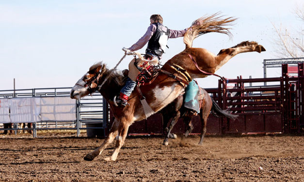 Veterinarian: Pro Rodeo Boasts 99.9% Animal Safety Record