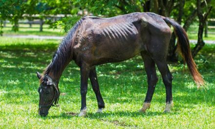 Refeeding Starved Horses