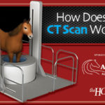 Infographic: How Does a CT Scan Work on Horses?