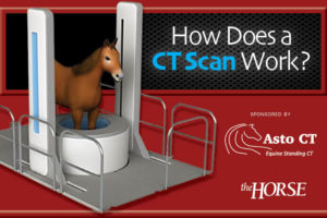 How Does a CT Scan Work?
