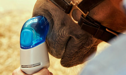 The Newest Treatment Options for Equine Asthma