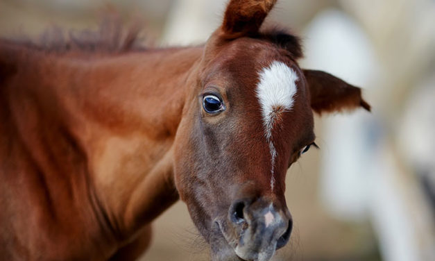 Foal Neurologic Exams: Steps and Signs of Disease