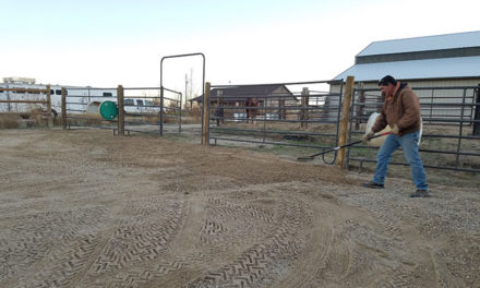 Dealing With Pooling Urine and Frozen Winter Horse Paddocks