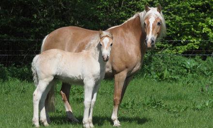 Study: WFFS Found in 21 Breeds