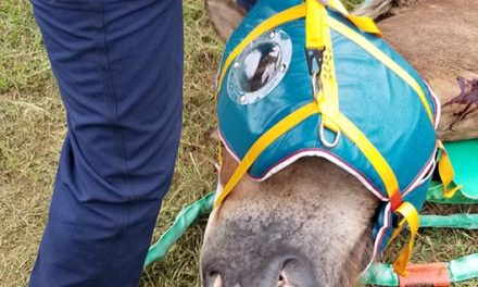 How Veterinarians Can Safely Restrain Down Horses