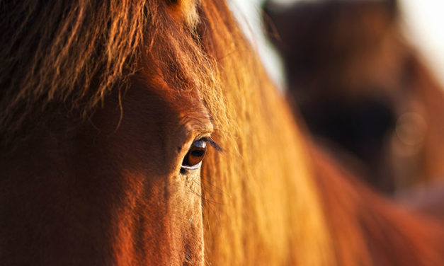 Big Problems for Equine Eyes