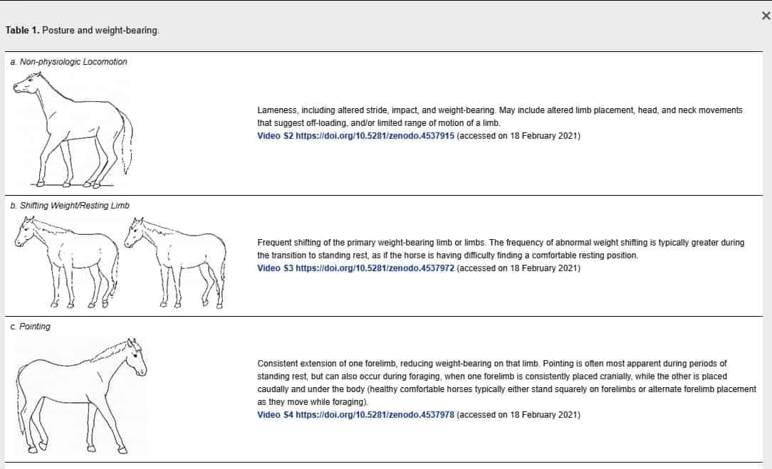 New Ethogram Describes 70+ Discomfort Behaviors in Horses