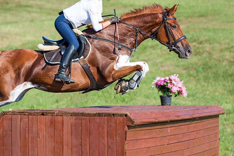 Study: Bit-Related Lesions Found in 52% of Eventing Horses