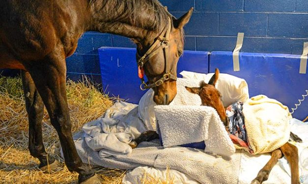 Saving the Somnolent Foal