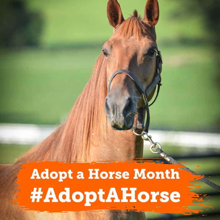 The ASPCA Celebrates Inaugural 'Adopt a Horse Month' in May