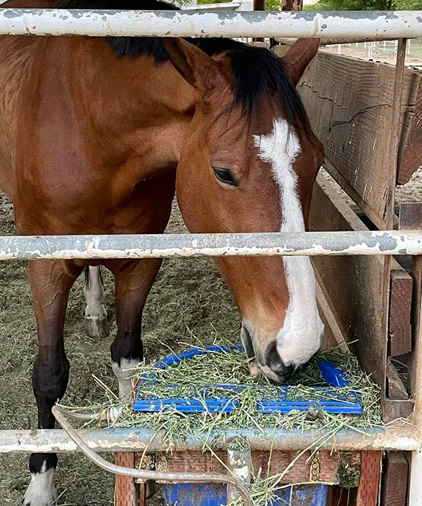 Why Does My Horse Dunk His Hay? – The Horse