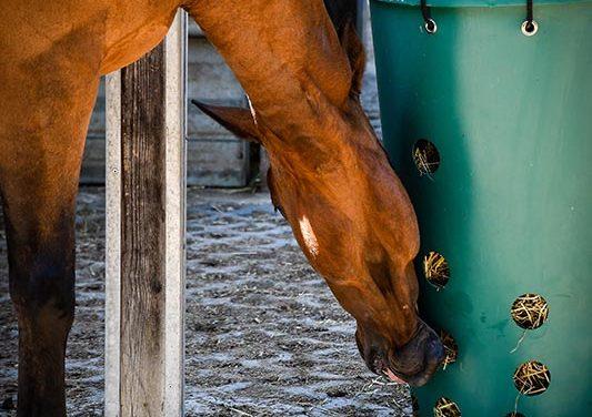 Horse Slow Feeder Safety