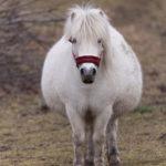 Predicting and Preparing for Foaling