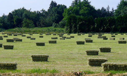 Is It Safe To Feed My Horses Fresh Hay Off the Field?
