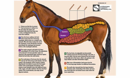 How Does the Equine GI Tract Work?