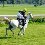 Researchers Link Three Genes To Arabian Racing Performance