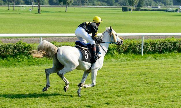 Researchers Link Three Genes To Arabian Racing Performance