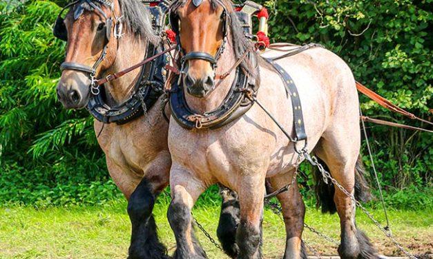Brushing Up on Tying Up in Horses