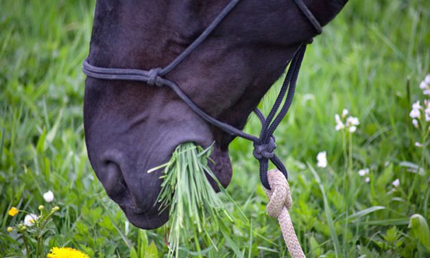 Transitioning Horses To Spring Pastures
