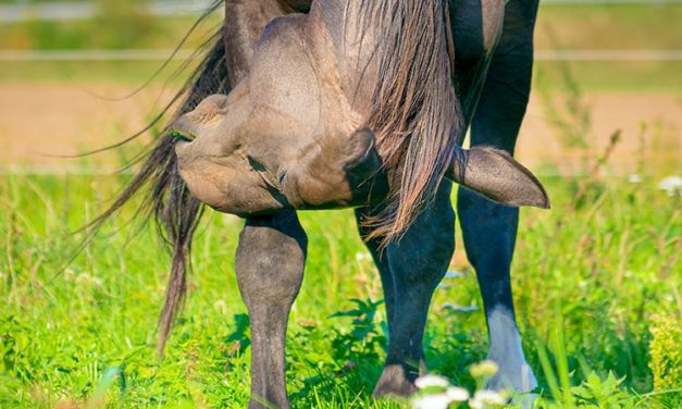 Providing Horses Relief During Allergy Season