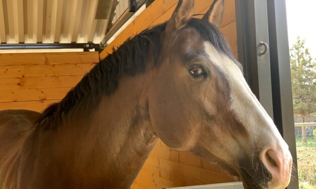 Can Horses Be Allergic to Stress?