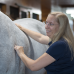 The Benefits of Massage for Your Horse