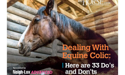 Dealing With Equine Colic: Here Are 33 Do's and Don'ts