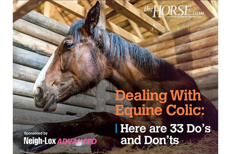 Special Feature |  Podotrochlosis: 'Navicular' is No Longer the End of the Road for Horses