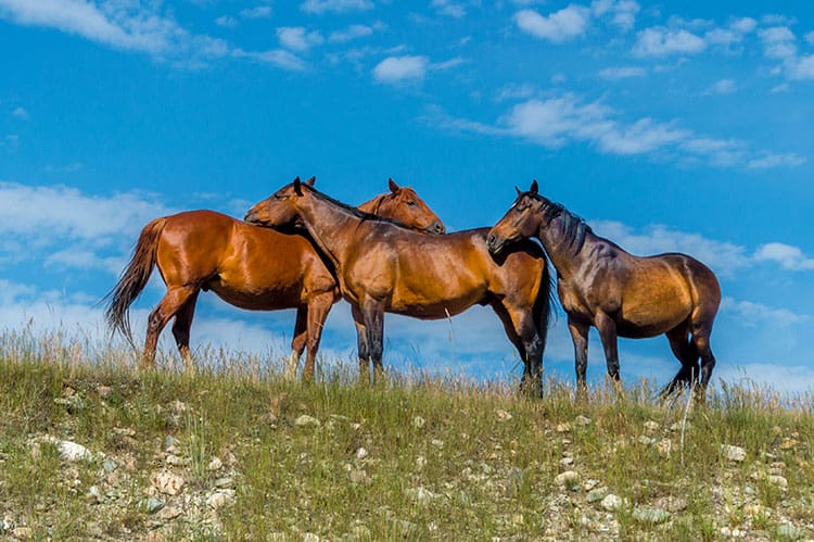 Is Your Horse Lonely? The Negative Effects of Social Isolation
