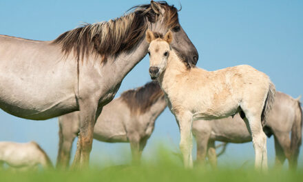 ACOX1 Gene Linked To Racehorse Performance, Breed Survival