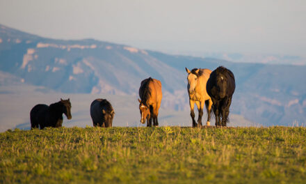 Can Horse Owners Absorb the Surplus of Wild Horses?