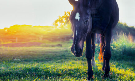 Learn to Recognize Equine Pasture Asthma