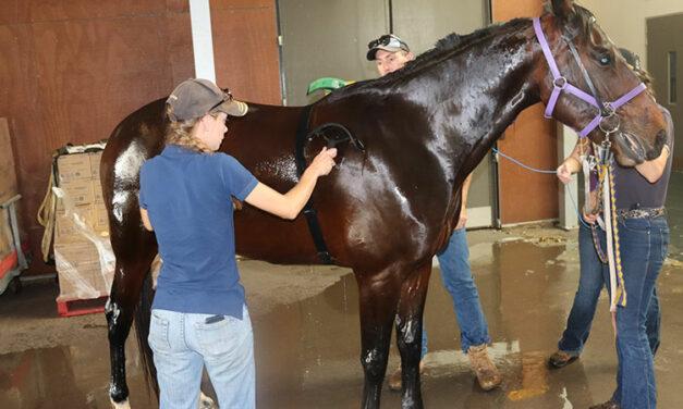 Hosing Hot Horses Post-Exercise: Scrape Off Water or Reapply?
