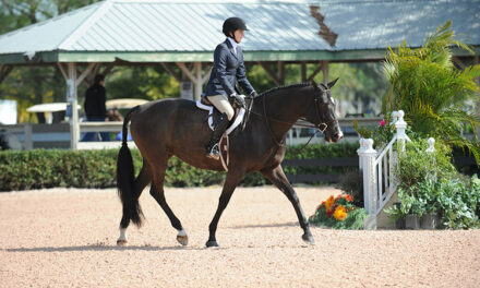 Hunter Judges Might Be More Lenient Toward Overweight Horses