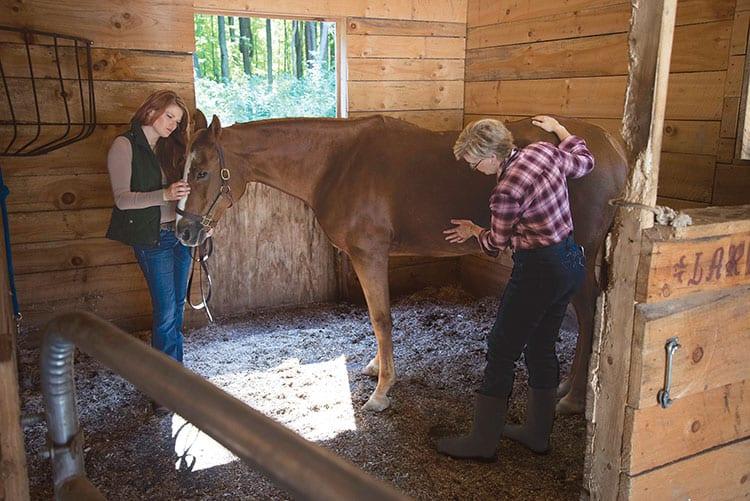 Diagnosing and Managing Equine GI Health Problems