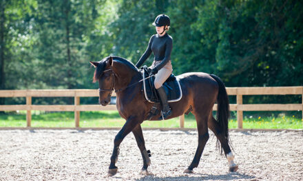 How Does Massage Integrate With Saddle Fit, Training, Hoof Care?